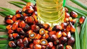 lpedragosa37373625 aceite de palma170220191635