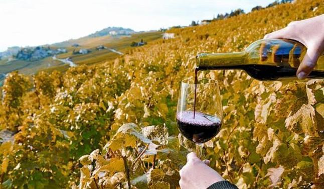 Agricultura establece la contribución obligatoria para la promoción del vino