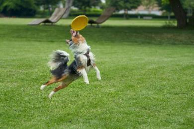 Los mejores frisbees o discos voladores