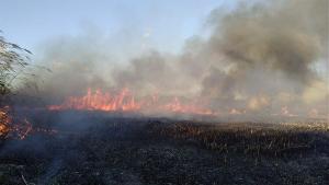 Un incendio descontrolado en s'Albufera obliga a desalojar varias casas