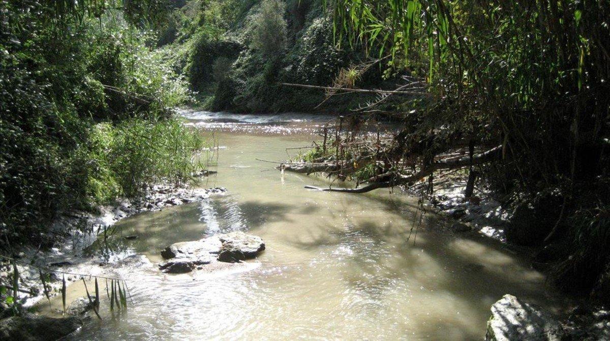 Tramo del río Anoia,afluente del Llobregat,uno de los cauces analizados por investigadores del IDAEA-CSIC.