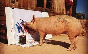 La cerda Pigcasso pintando una de sus obras en su refugio de Sudáfrica