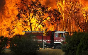 Al menos 480 millones de animales están siendo víctimas de esos devastadores incendios forestales.