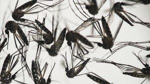 Tailàndia confirma els dos primers casos de microcefàlia per Zika al Sud-est Asiàtic