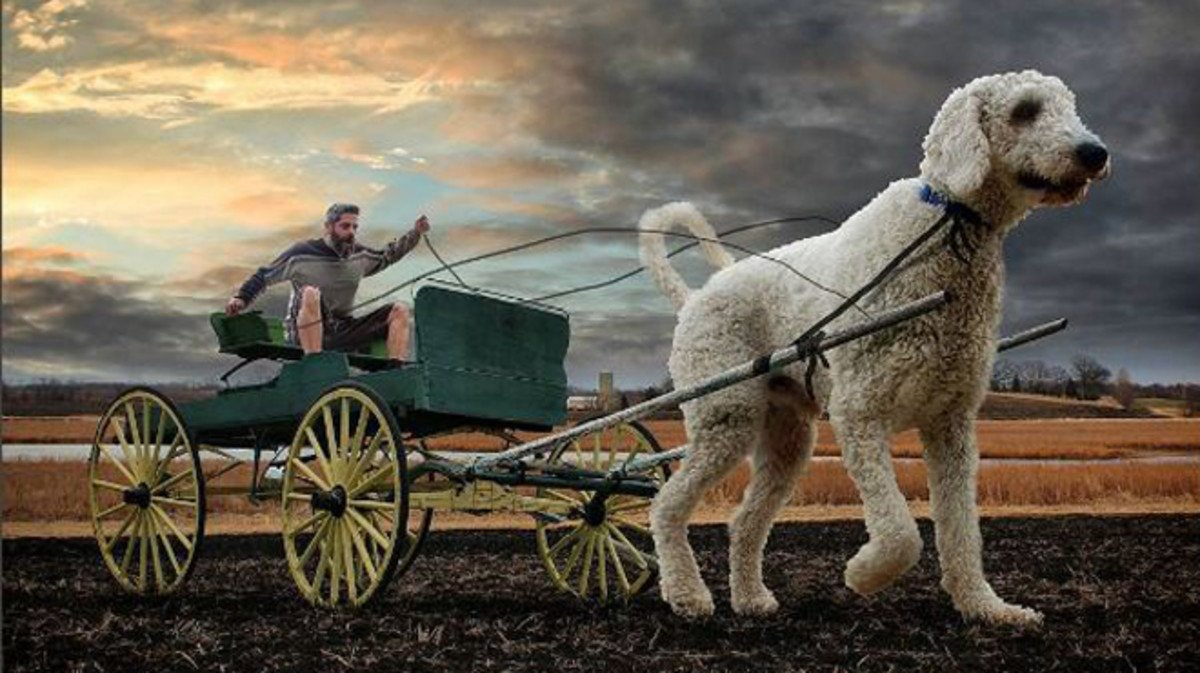 El perro Juji tira de una carreta con su dueño a bordo.