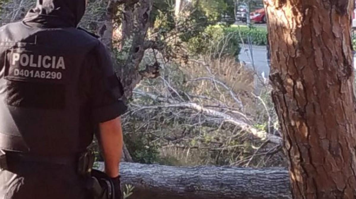 Un agente contempla la tala de árboles en la pineda de El Castell de Castelldefels.