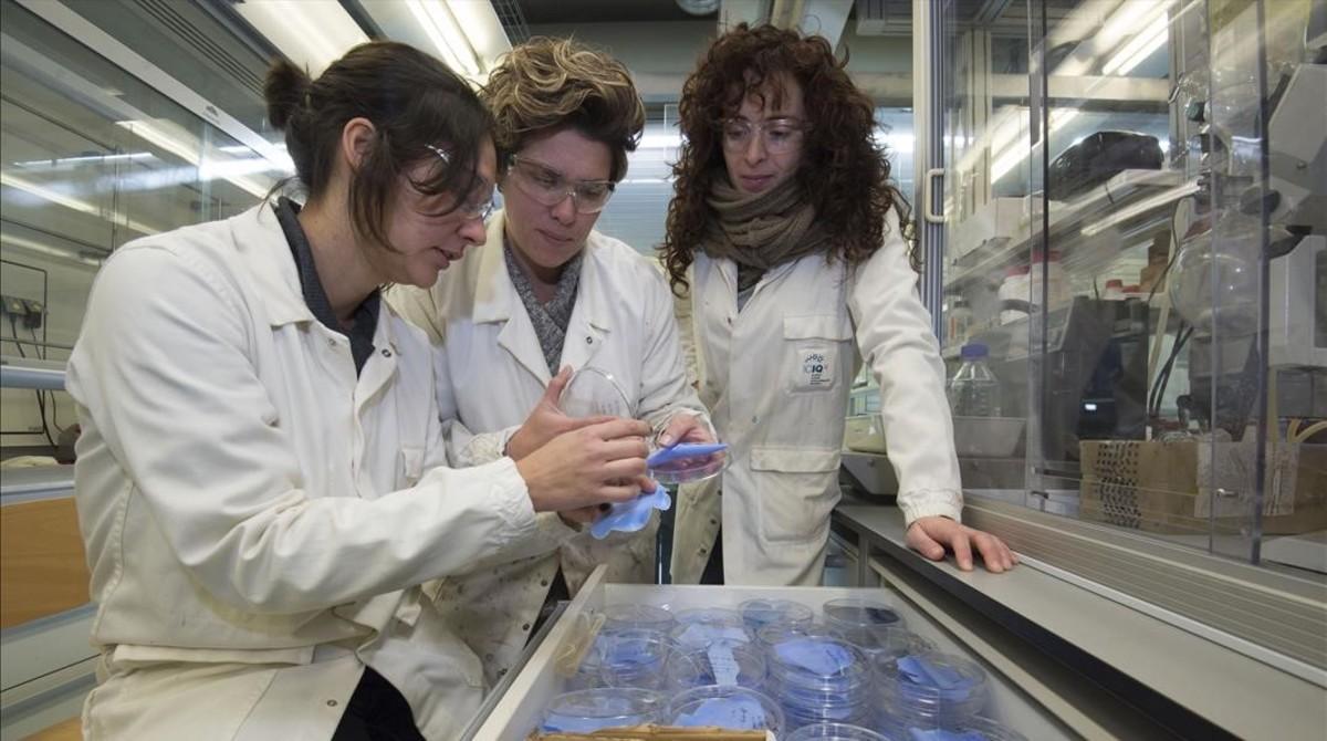 Mabel Torrens,Vanesa Lillo y Cristina Sáenz de Pipaón, investigadoras del ICIQ, junto a unamebranas filtradoras de dióxido de carbono (CO2).