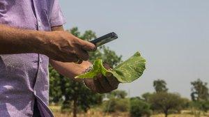 Análisis de plagas en plantas gracias a Plantix una app de la start-up alemana Peat.