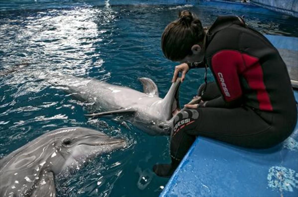 Una cuidadora juega con uno de los delfines, en el Zoo de Barcelona.