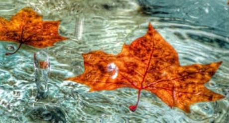 No temas al otoño, si ha venido, escriu@josan103 recitant Leopoldo Lugones.