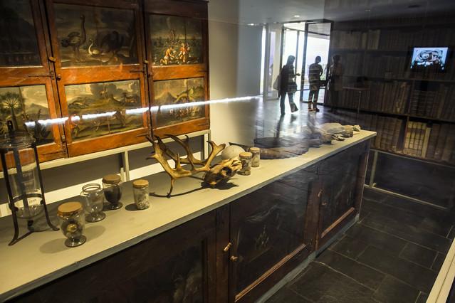 Diversos objectes exposats a Salvadoriana, el gabinet de curiositats de Barcelona.
