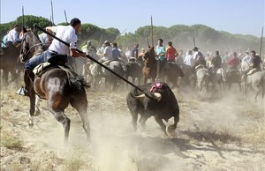 cmarquez14013817 a horseman stears the bull during toro de la vega festival160909155216