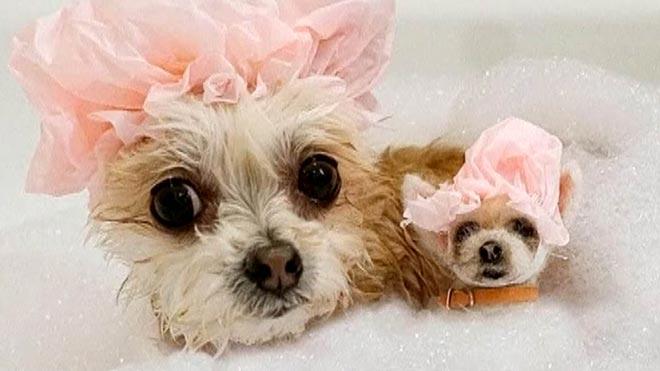 Una amante de los perros crea réplicas de mascotas.