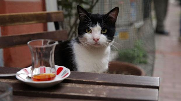 Tráiler de Kedi (Gatos de Estambul) (2016).