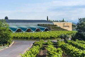 Imagen de unos viñedos con una bodegaal fondo,en Sant Sadurní d'Anoia.
