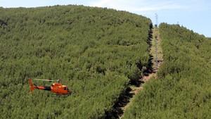 Helicóptero de Endesa, revisando las líneas eléctricas de los bosques catalanes.