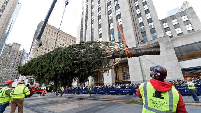 Llega el famoso árbol de Navidad al Rockefeller Center de Nueva York.