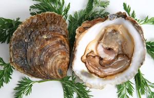 Las 5 mejores barras de ostras de Barcelona