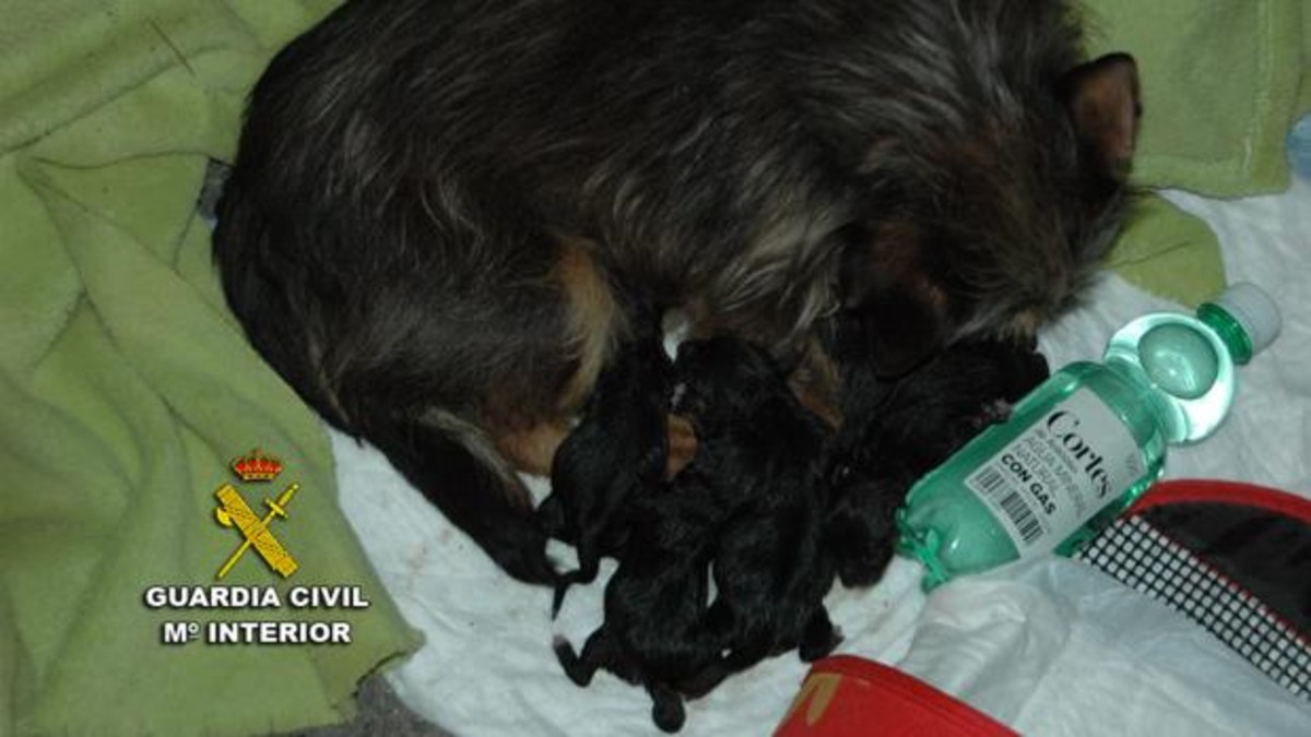 La perra con sus cachorros, poco antes de ser rescatados del contenedor.