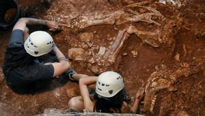 Esqueleto derinoceronte hallado en Castelldefels.