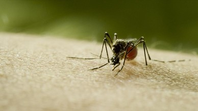 Defenderse de los mosquitos