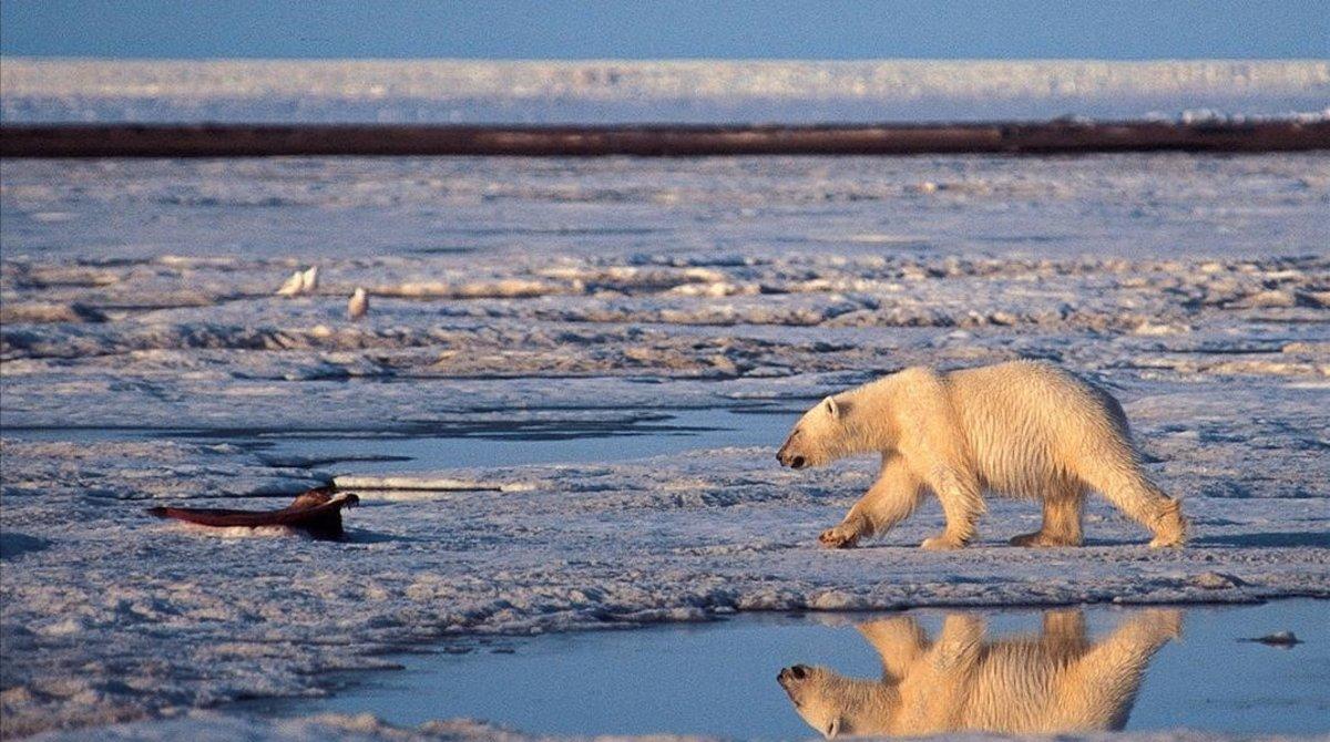 Trump obre l'Àrtic a l'explotació petroliera