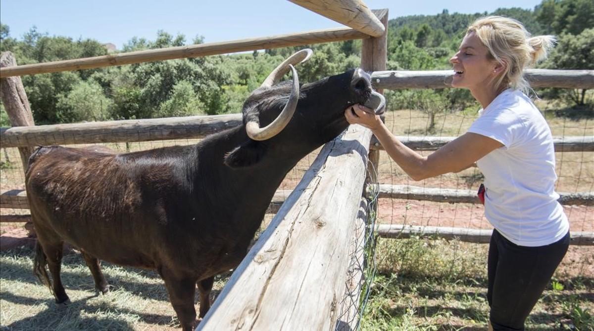 La vaca Margarita, en su nuevo hogar del santuario El Hogar ProVegan, en Marçà (Priorat).
