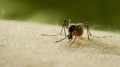 Defensar-se dels mosquits