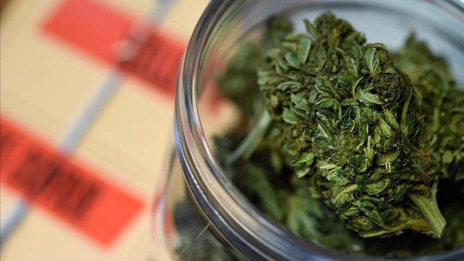 El cànnabis, pal·liatiu però no curatiu