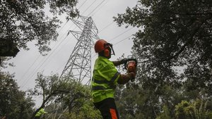 Un técnico de Endesarecorta masa forestal en Olèrdola (Baix Penedès), ayer.