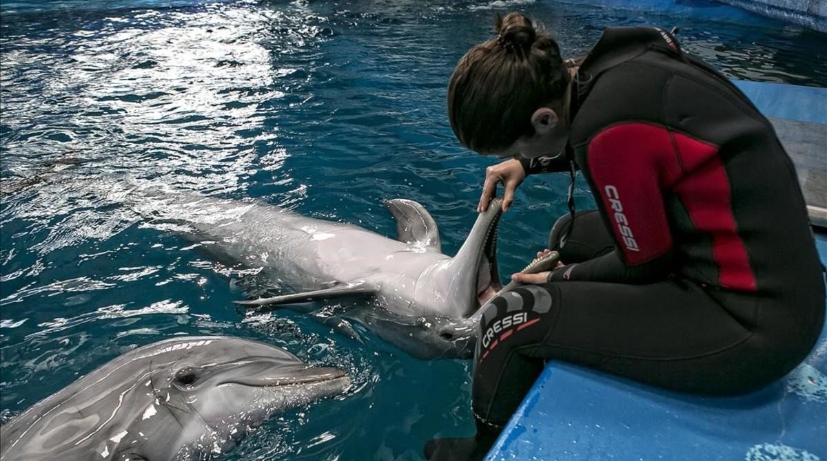 Barcelona deberá renunciar a sus cetáceos si no mejora el delfinario del zoo antes del 2019