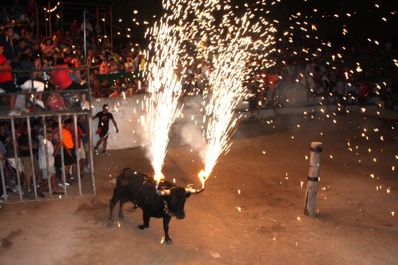 Un toro embolat, durante las fiestas de Masdenverge, en el Montsià.