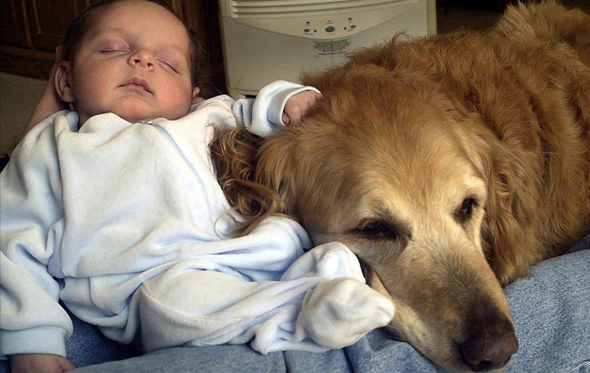 ¿Por qué se celebra hoy el día mundial del perro ?