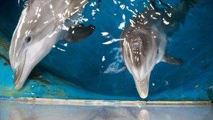 Multa Aquapolis Costa Daurada per tenir sis dofins en una instal·lació inadequada