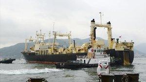 El Japó reprèn la caça de balenes després de 30 anys