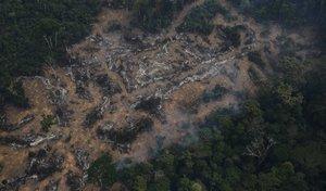 La tala ilegal y la posesión de tierras por parte de las mafias está acabando, poco a poco, con la zona de Rondonia.