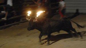 Un bou embolat en una imagen de archivo.