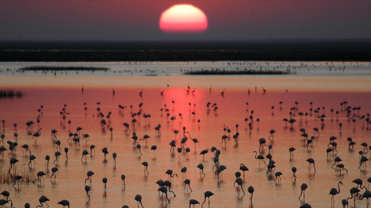 Aves en uno de los humedales del parque nacional de Doñana.
