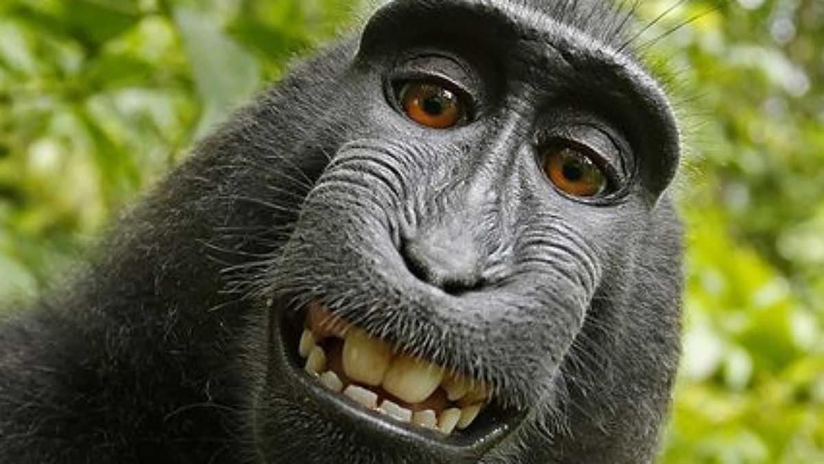 La famosa autofoto del macaco Naruto que rompió internet hace unos años.