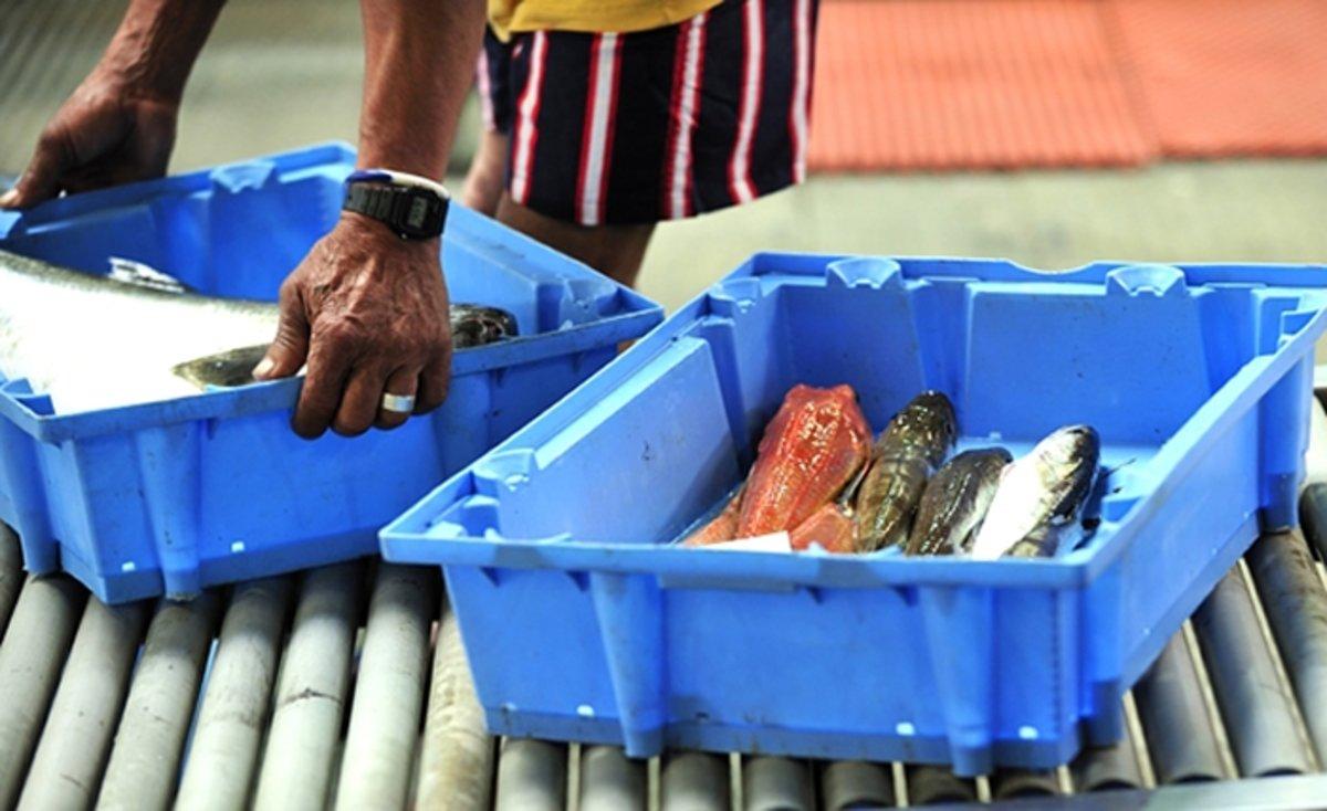 Campanya de la Generalitat per promoure el consum de peix de proximitat