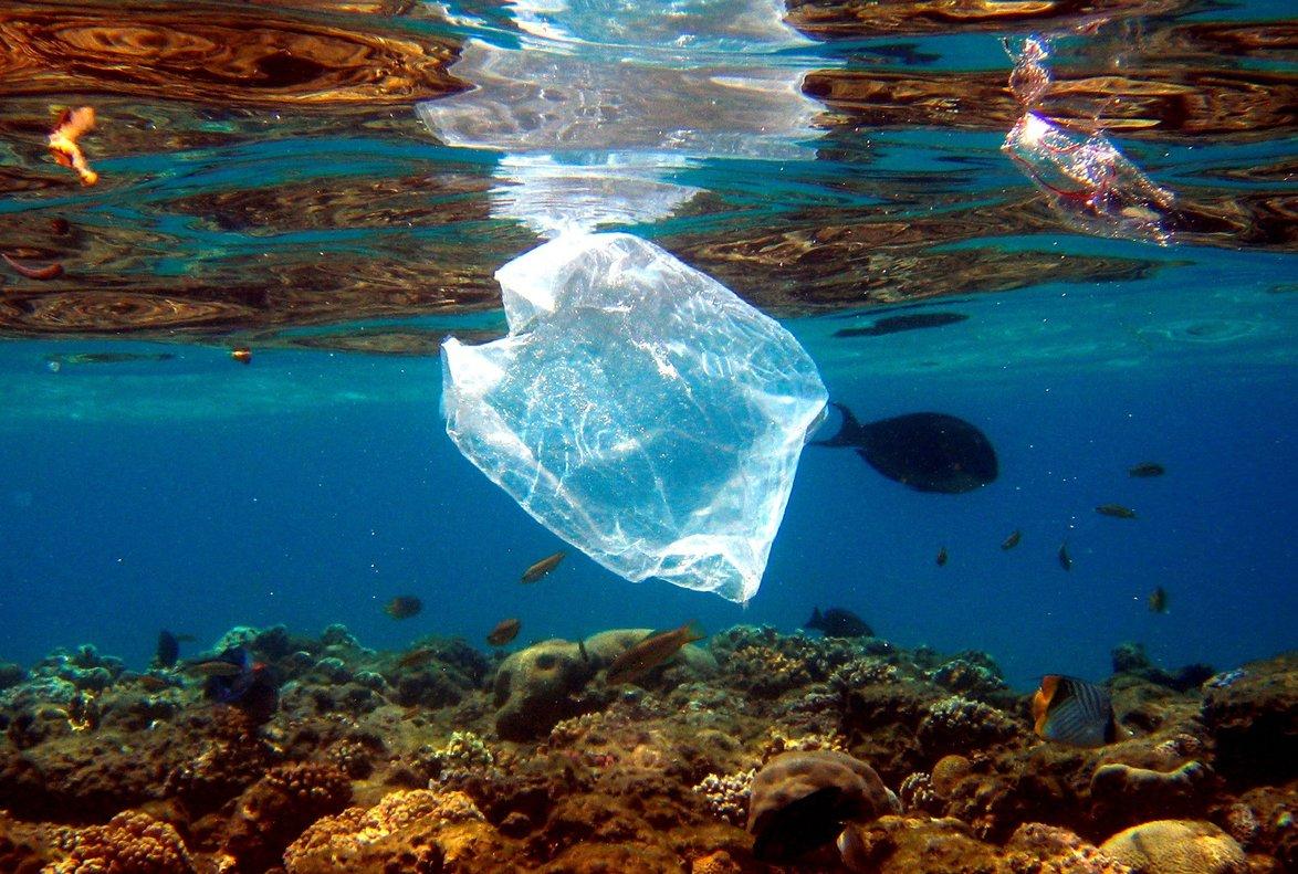 Peces nadan alrededor de una bolsa de plástico en el Mar Rojo.