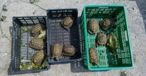 Augmenta l'abandonament d'espècies exòtiques a Parets