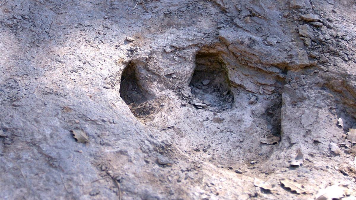 El pie más grande de dinosaurio fue descubierto en EU