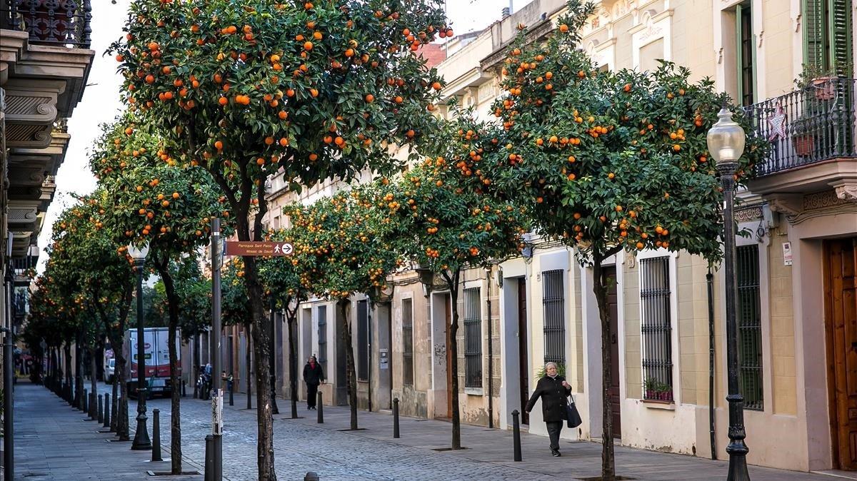 El carrer Coroleu, con los naranjos en plena efervescencia.
