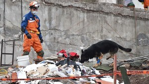 mbenach40230071 a japanese rescuer with a sniffer dog takes part in the sear170922174122