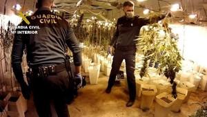 Cinc detinguts en l'operació d'incautació de marihuana més gran de València