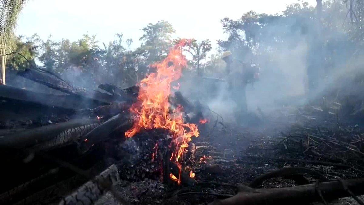 Aumenta 222 la deforestación en la Amazonia brasileña.
