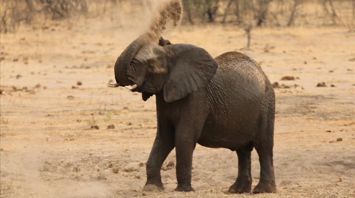Un elefante en el Parque Nacional de Hwange en Zimbabue.