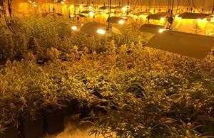 Plantación de marihuana de la Zona Franca de Barcelona hallada por los Mossos dEsquadra.