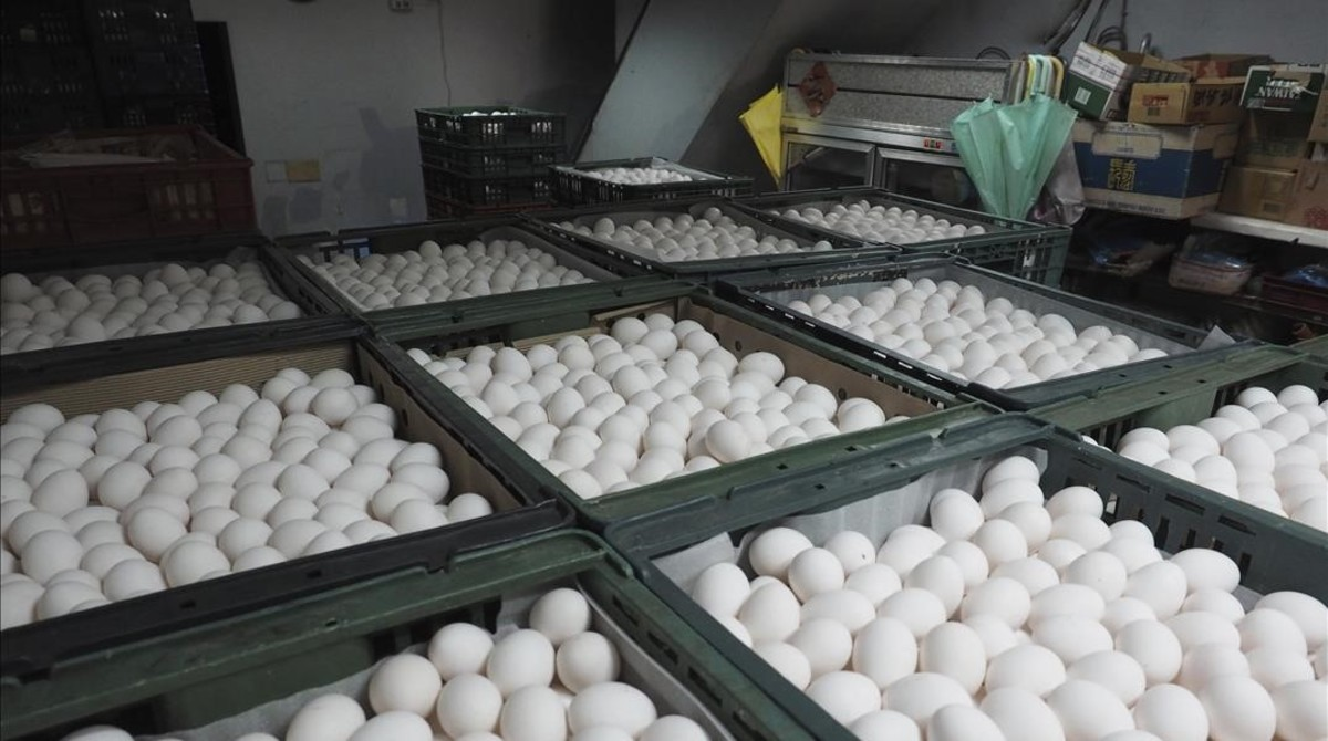 Una granja de huevos en Taiwán.